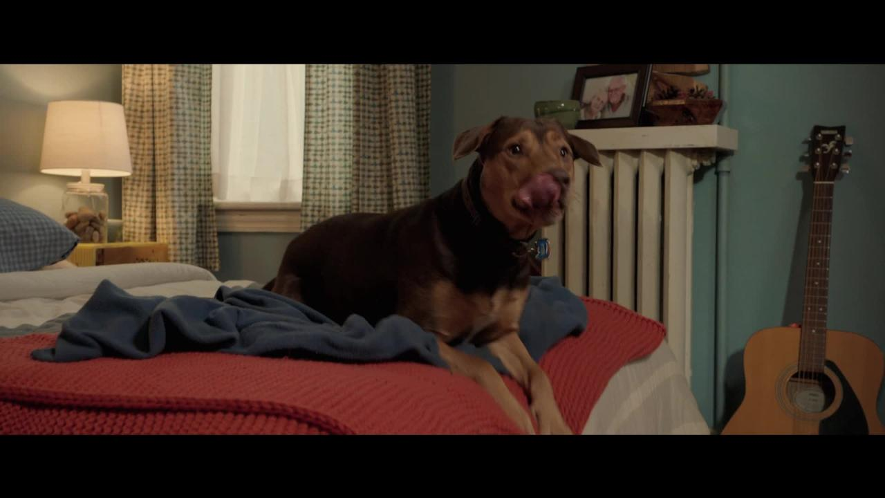 Play trailer for A Dog's Way Home